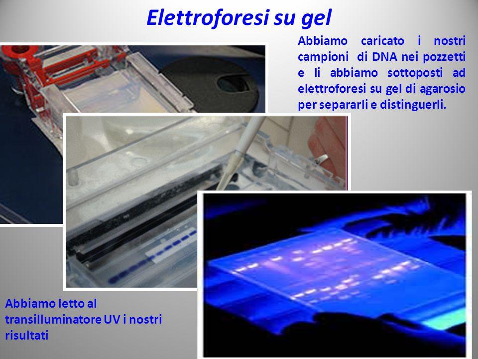 Elettroforesi su gel