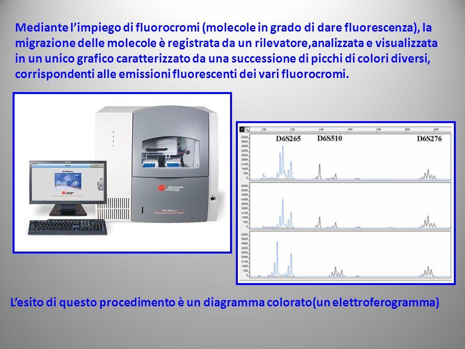 Mediante l'impiego di fluorocromi (molecole in grado di dare fluorescenza), la migrazione delle molecole è registrata da un rilevatore,analizzata e visualizzata in un unico grafico caratterizzato da una successione di picchi di colori diversi,