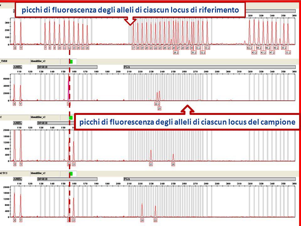 picchi di fluorescenza degli alleli di ciascun locus di riferimento