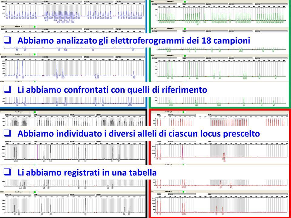Abbiamo analizzato gli elettroferogrammi dei 18 campioni