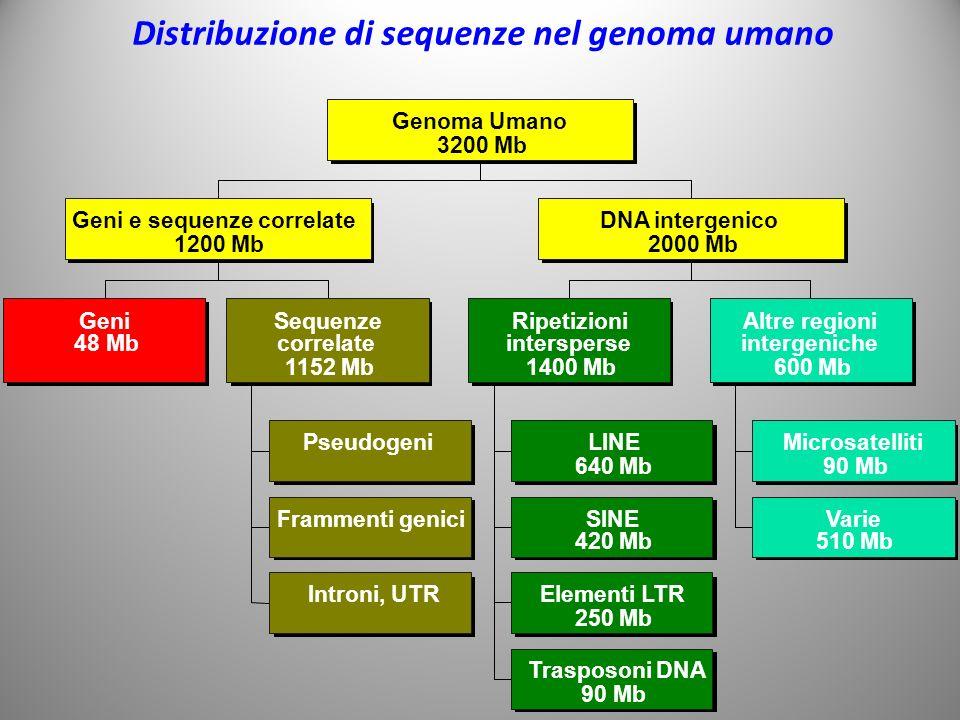 Distribuzione di sequenze nel genoma umano