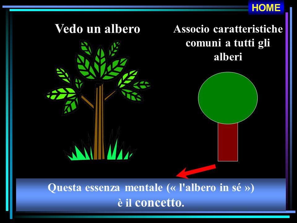 Vedo un albero Associo caratteristiche comuni a tutti gli alberi