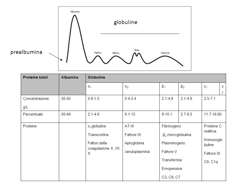 globuline prealbumina Proteine totali Albumina Globuline α1 α2 β1 β2