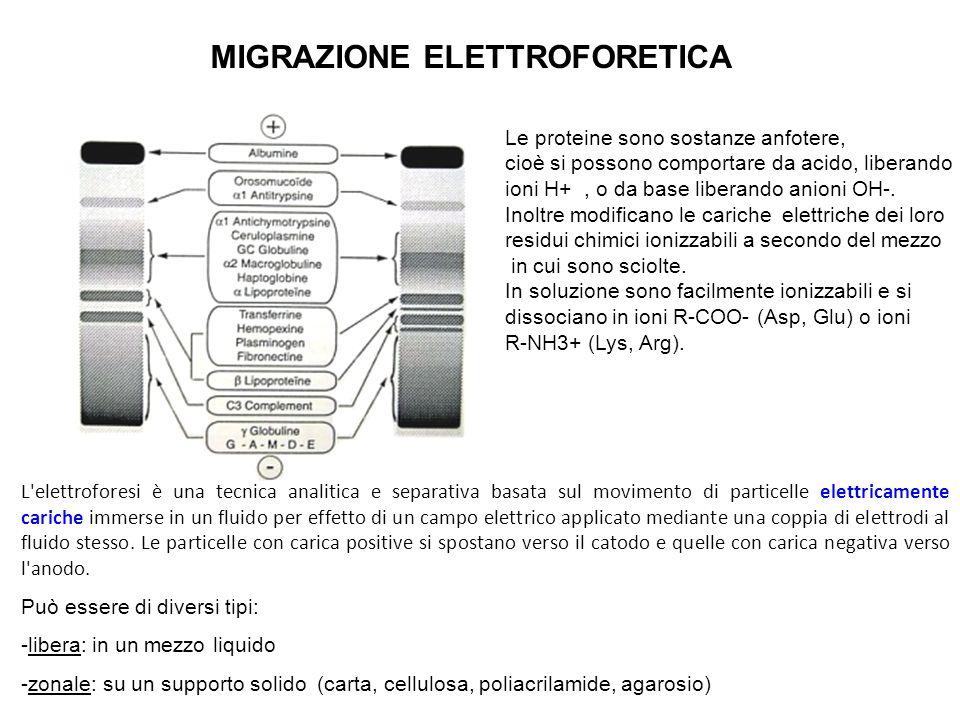 MIGRAZIONE ELETTROFORETICA