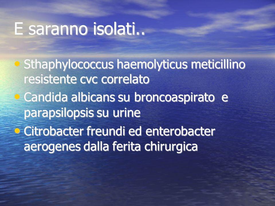 E saranno isolati.. Sthaphylococcus haemolyticus meticillino resistente cvc correlato.