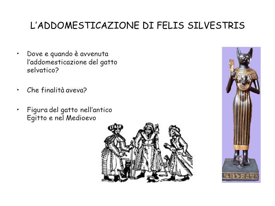 L'ADDOMESTICAZIONE DI FELIS SILVESTRIS