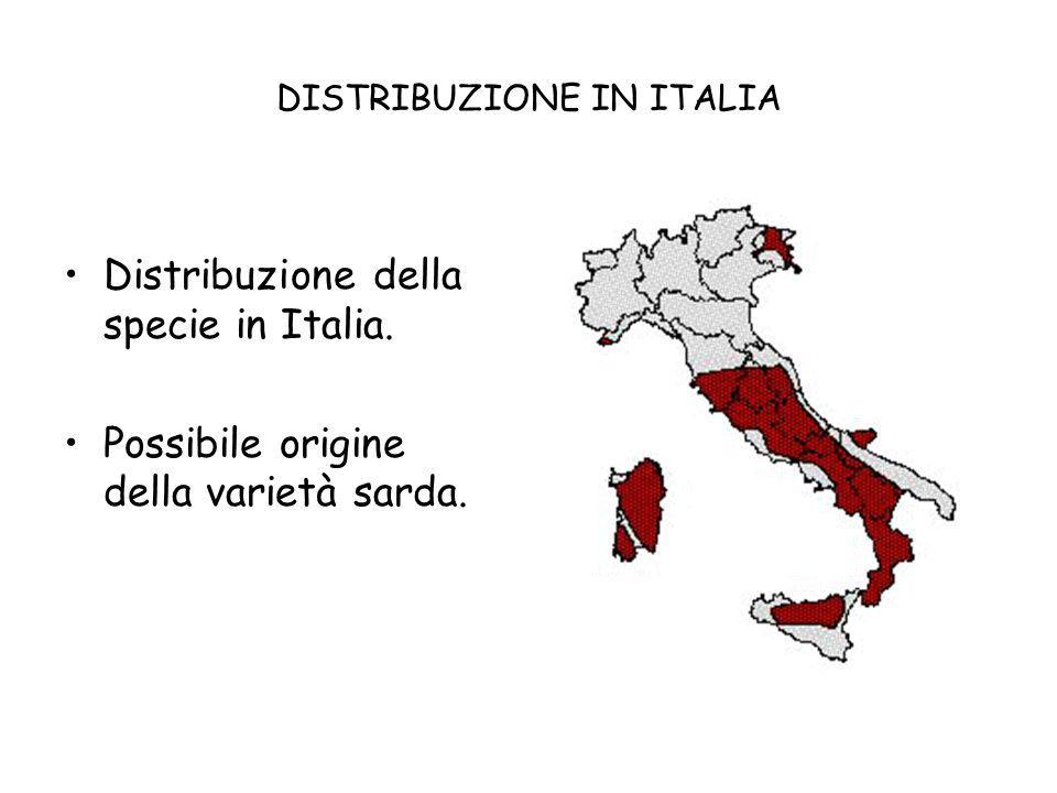 DISTRIBUZIONE IN ITALIA