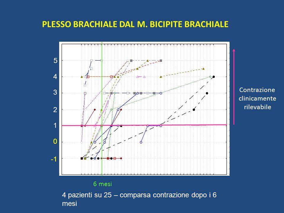 PLESSO BRACHIALE DAL M. BICIPITE BRACHIALE