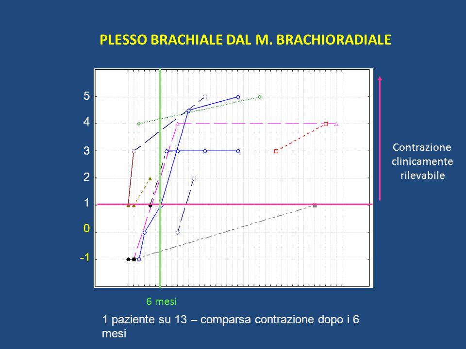 PLESSO BRACHIALE DAL M. BRACHIORADIALE