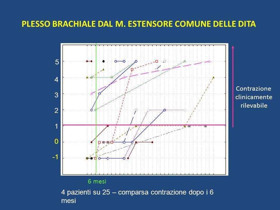 PLESSO BRACHIALE DAL M. ESTENSORE COMUNE DELLE DITA