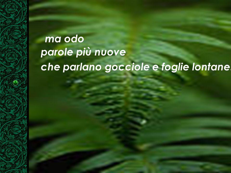 ma odo parole più nuove che parlano gocciole e foglie lontane.