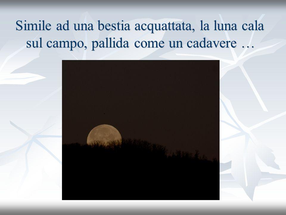 Simile ad una bestia acquattata, la luna cala sul campo, pallida come un cadavere …