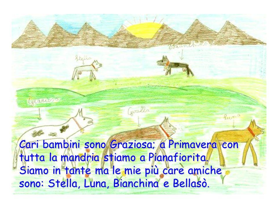 Cari bambini sono Graziosa; a Primavera con tutta la mandria stiamo a Pianafiorita. Siamo in tante ma le mie più care amiche sono: Stella Luna, Bianchina e Bellasò.