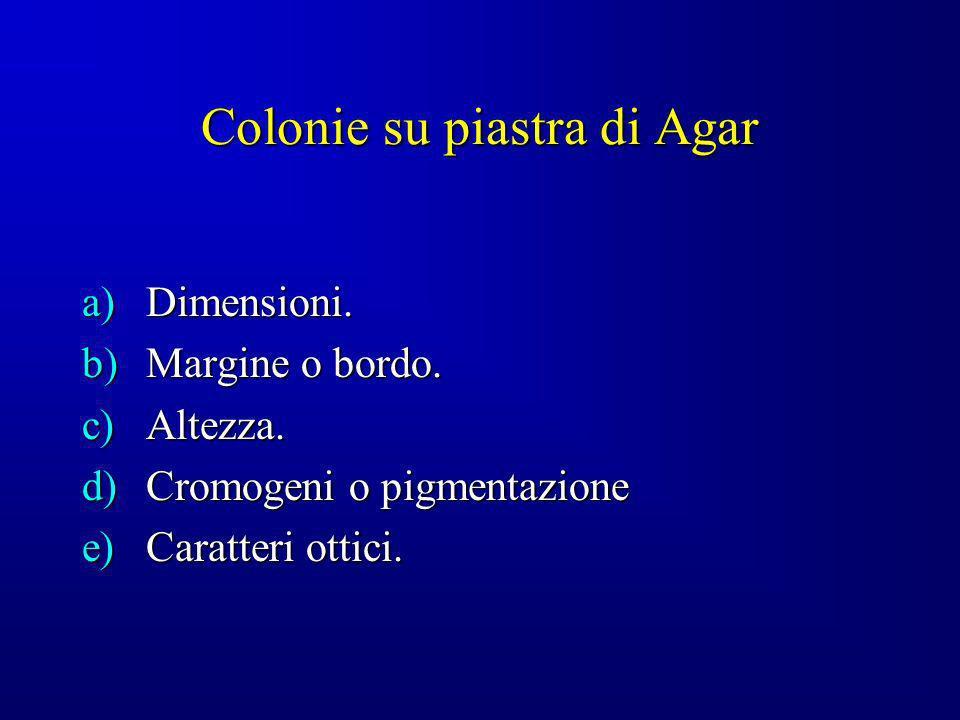 Colonie su piastra di Agar