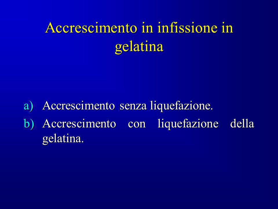 Accrescimento in infissione in gelatina