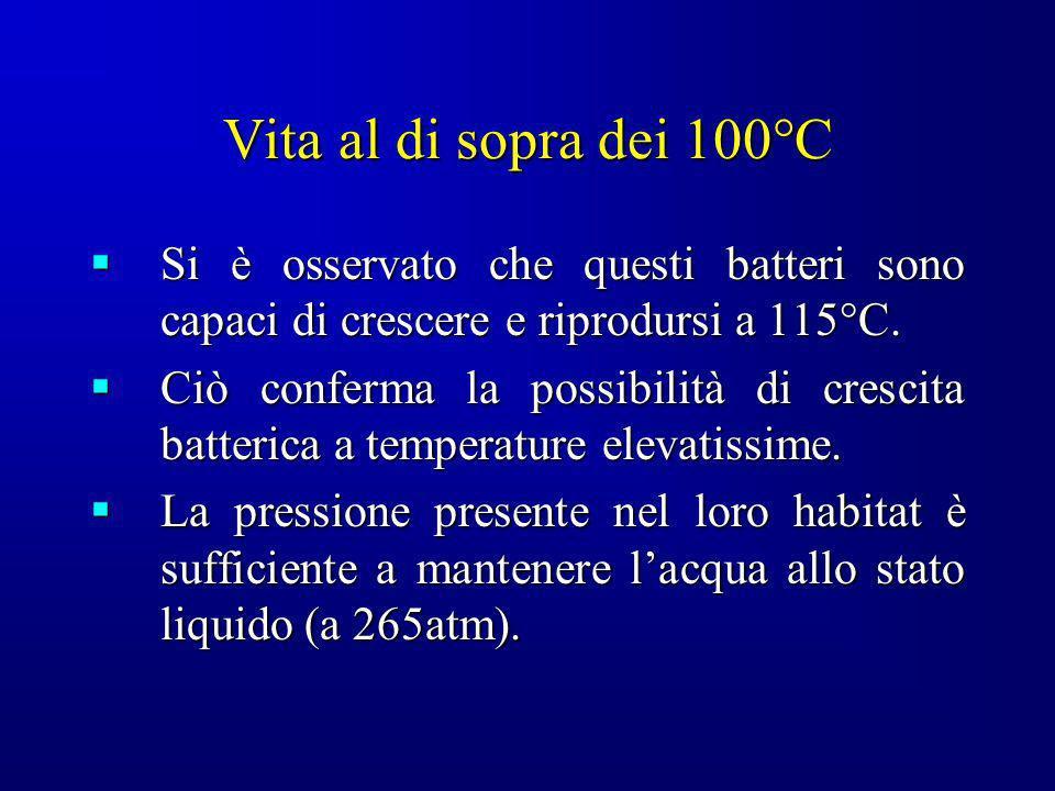 Vita al di sopra dei 100°C Si è osservato che questi batteri sono capaci di crescere e riprodursi a 115°C.