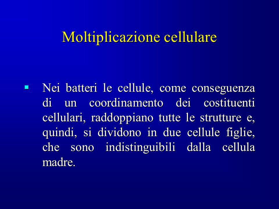 Moltiplicazione cellulare