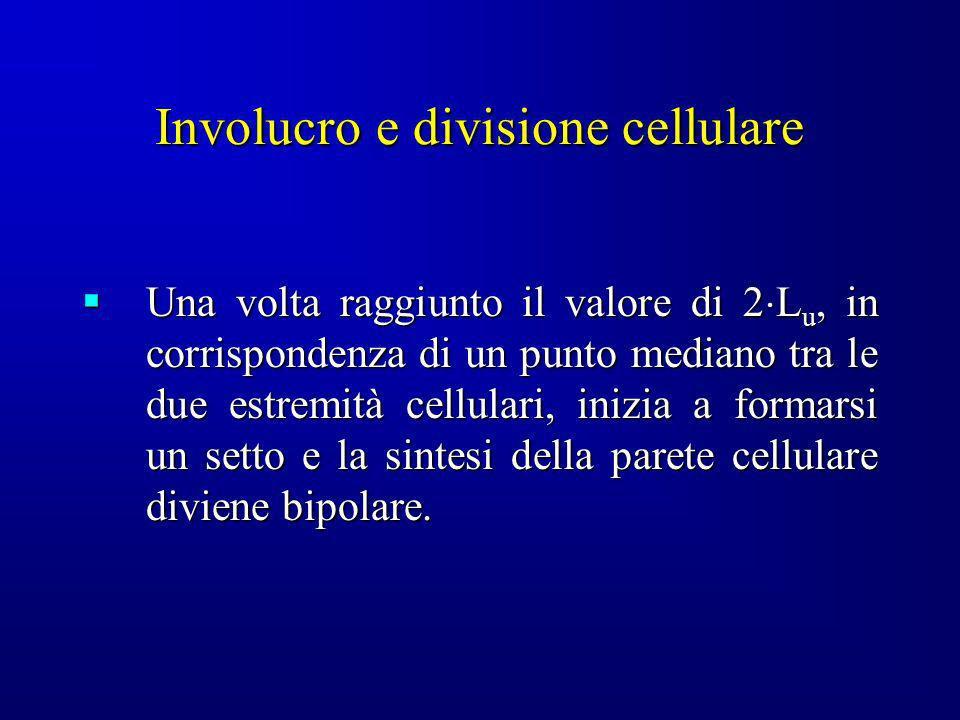 Involucro e divisione cellulare