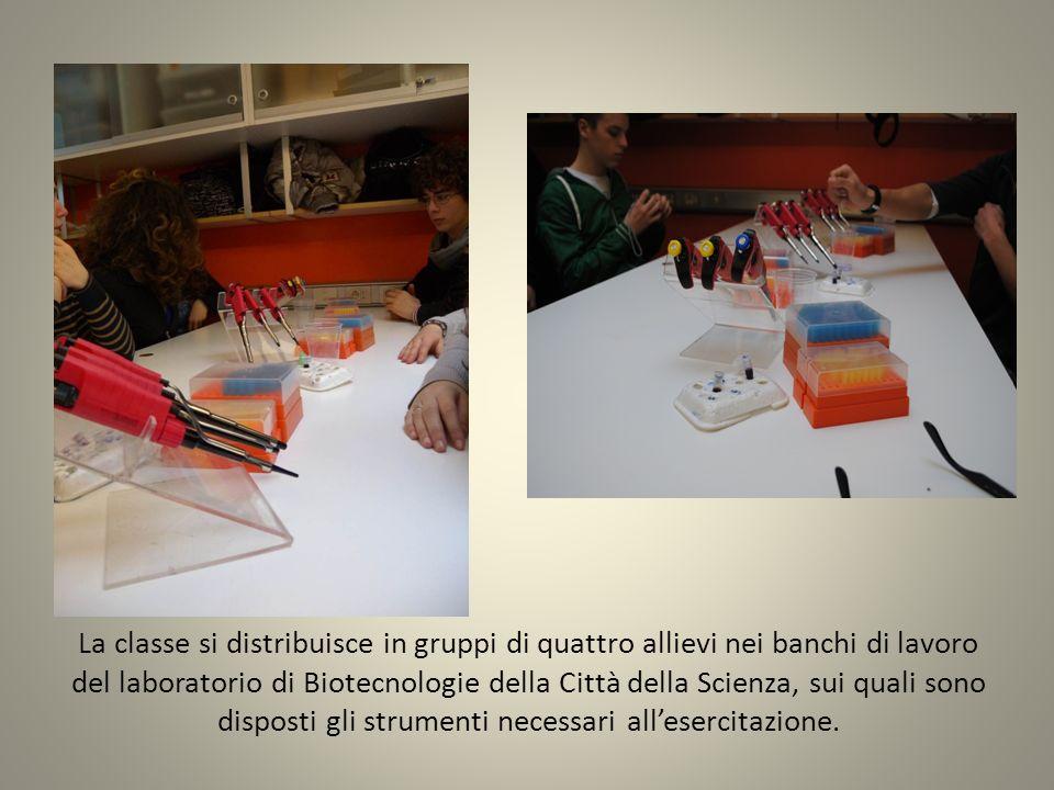 La classe si distribuisce in gruppi di quattro allievi nei banchi di lavoro del laboratorio di Biotecnologie della Città della Scienza, sui quali sono disposti gli strumenti necessari all'esercitazione.