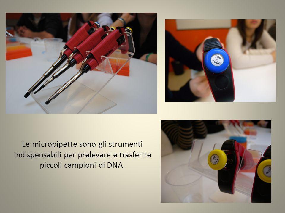 Le micropipette sono gli strumenti indispensabili per prelevare e trasferire piccoli campioni di DNA.