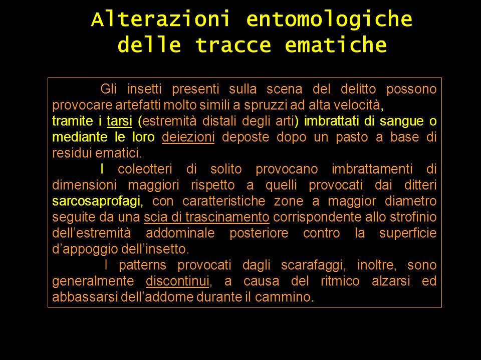 Alterazioni entomologiche delle tracce ematiche