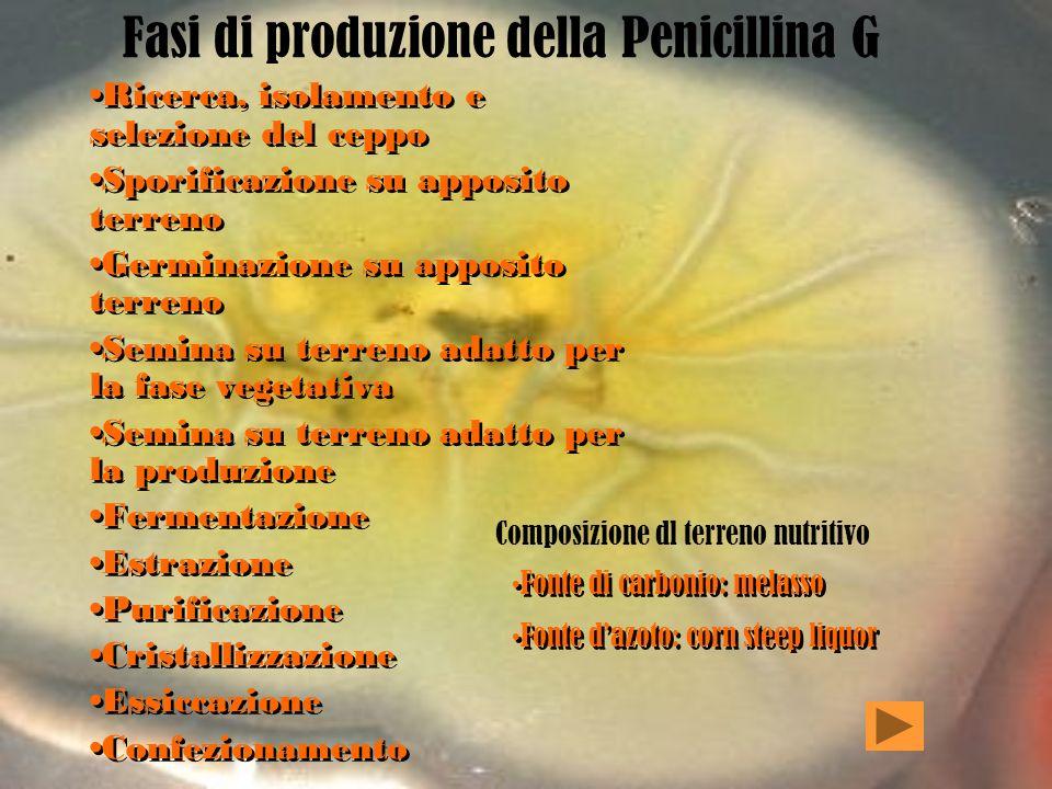 Fasi di produzione della Penicillina G