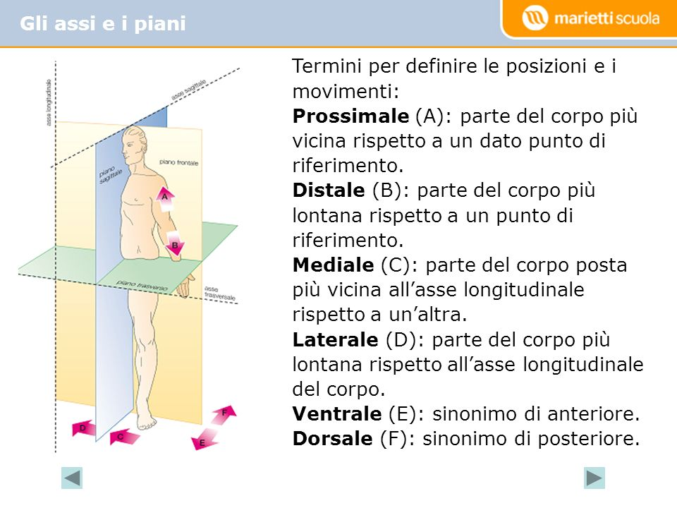 Gli assi e i piani Termini per definire le posizioni e i movimenti: