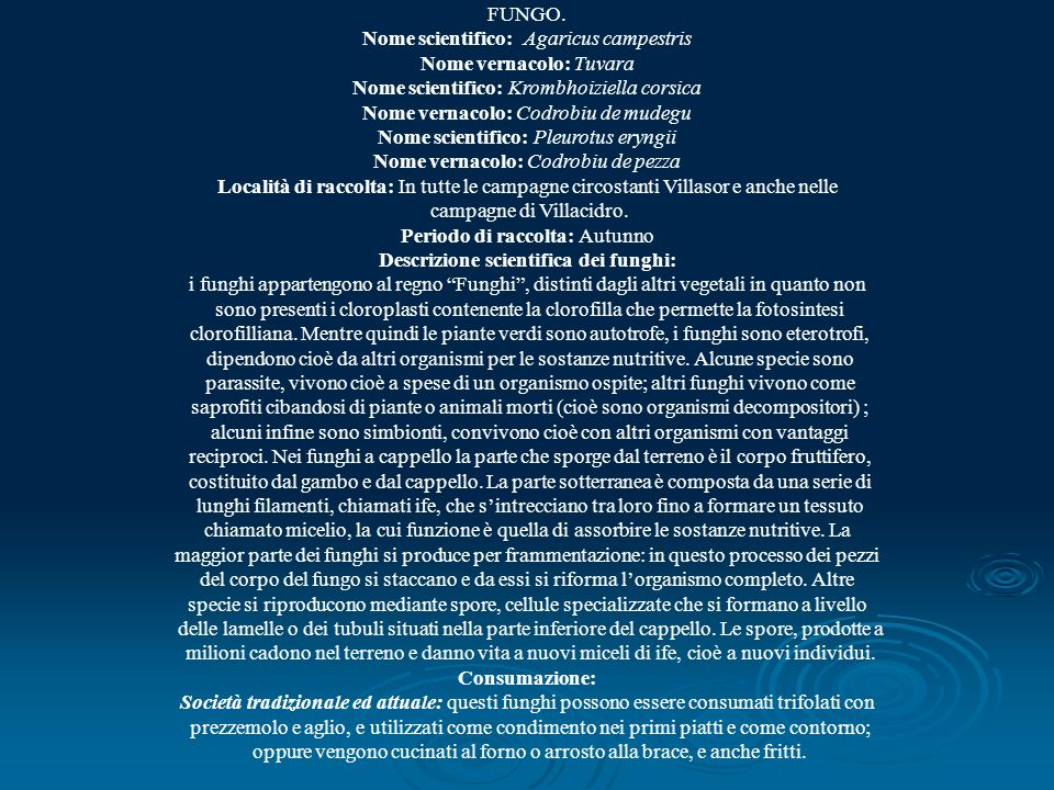 Nome scientifico: Agaricus campestris Nome vernacolo: Tuvara