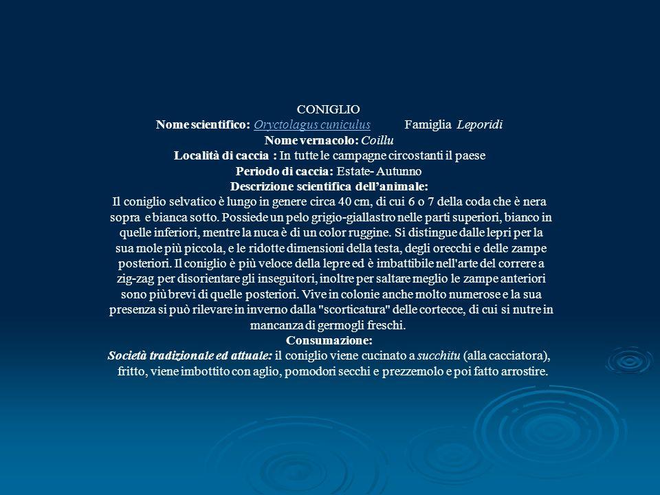 Nome scientifico: Oryctolagus cuniculus Famiglia Leporidi