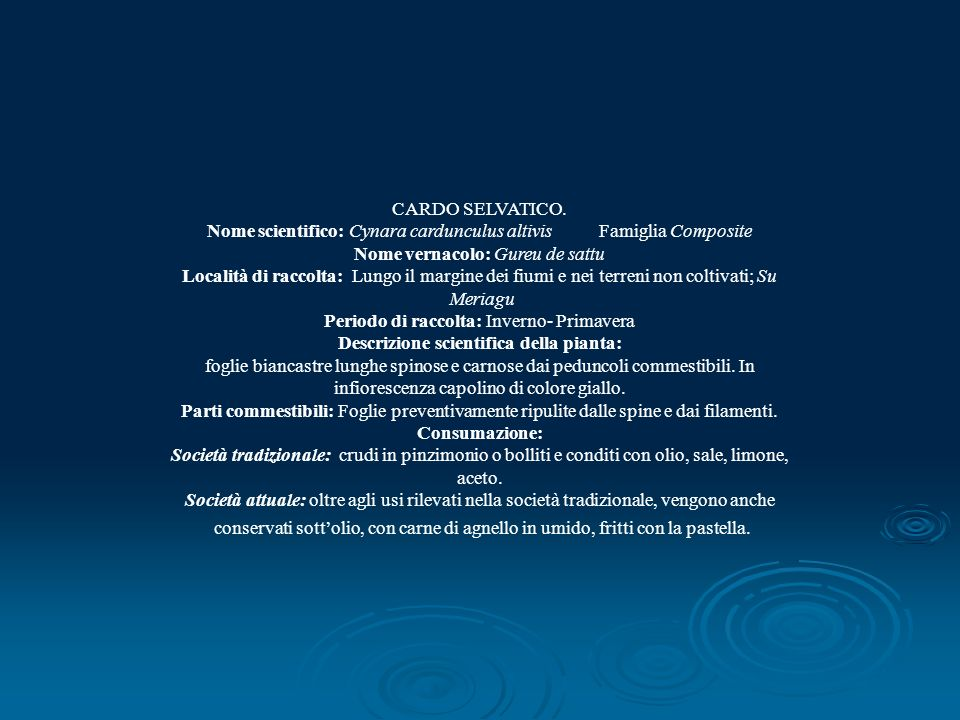 Nome scientifico: Cynara cardunculus altivis Famiglia Composite