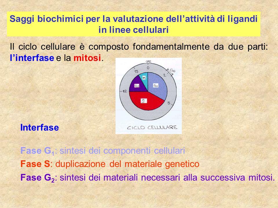 Saggi biochimici per la valutazione dell'attività di ligandi