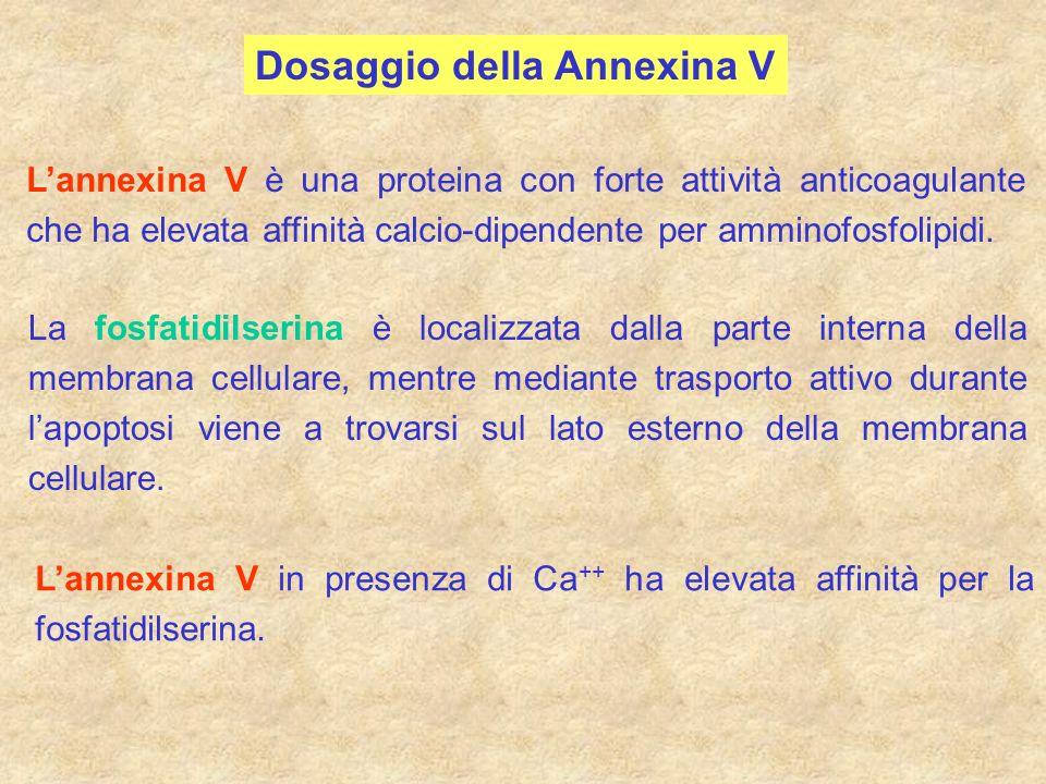 Dosaggio della Annexina V