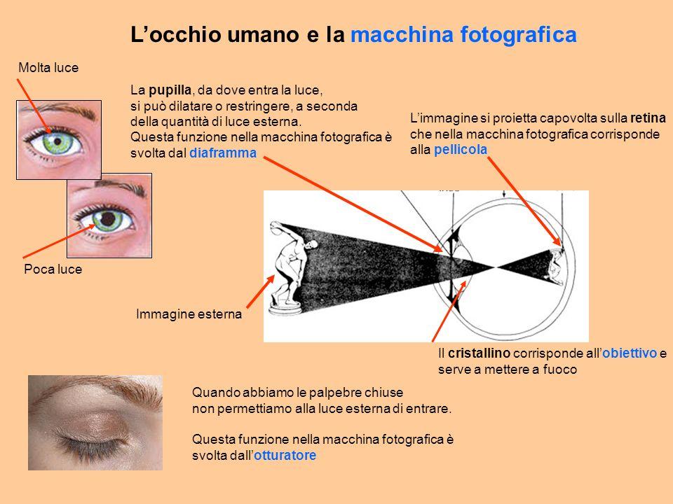 L'occhio umano e la macchina fotografica