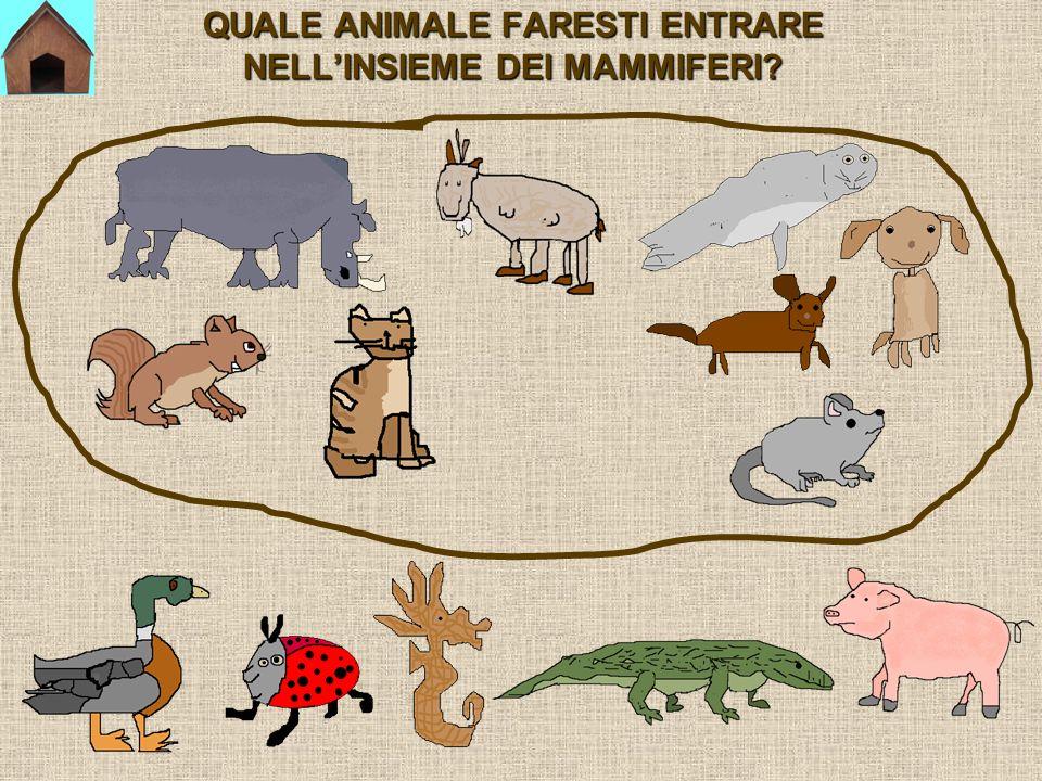 QUALE ANIMALE FARESTI ENTRARE NELL'INSIEME DEI MAMMIFERI