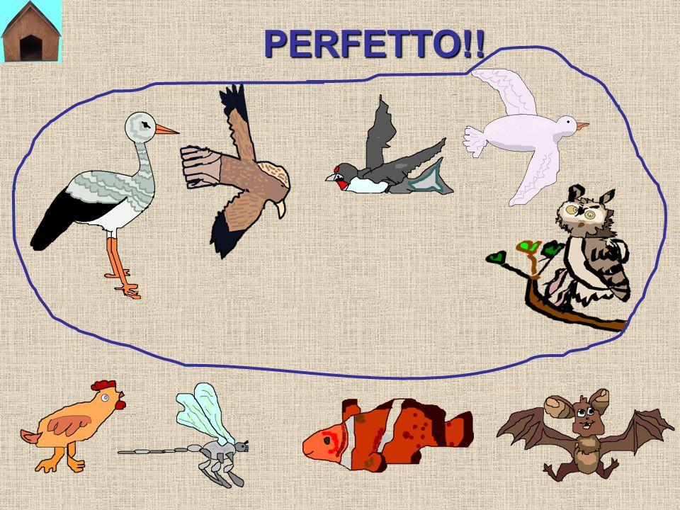 PERFETTO!!