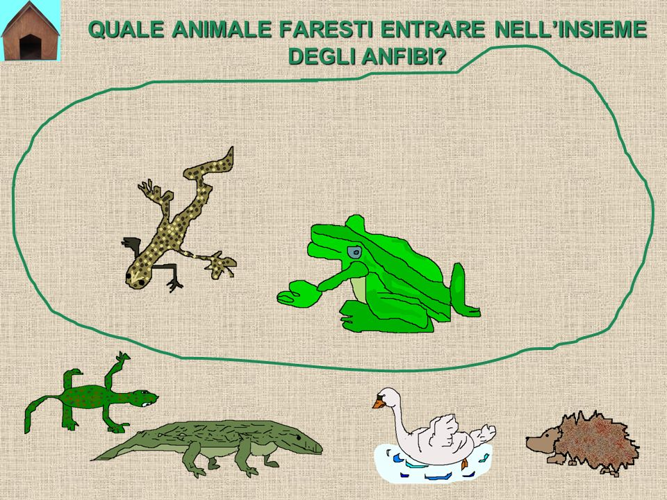 QUALE ANIMALE FARESTI ENTRARE NELL'INSIEME DEGLI ANFIBI