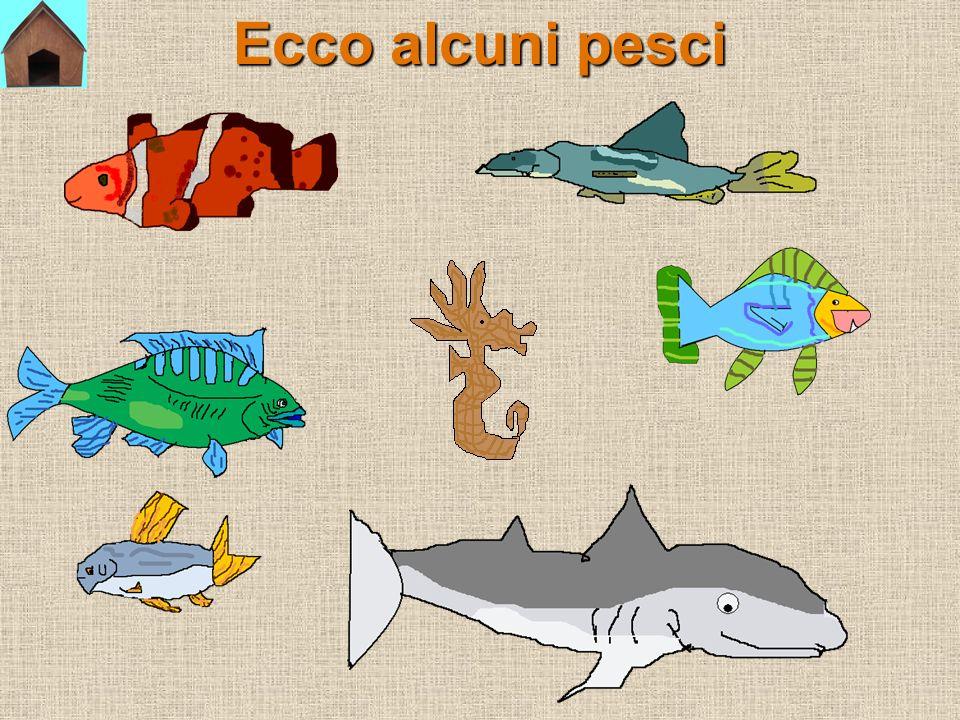 Ecco alcuni pesci