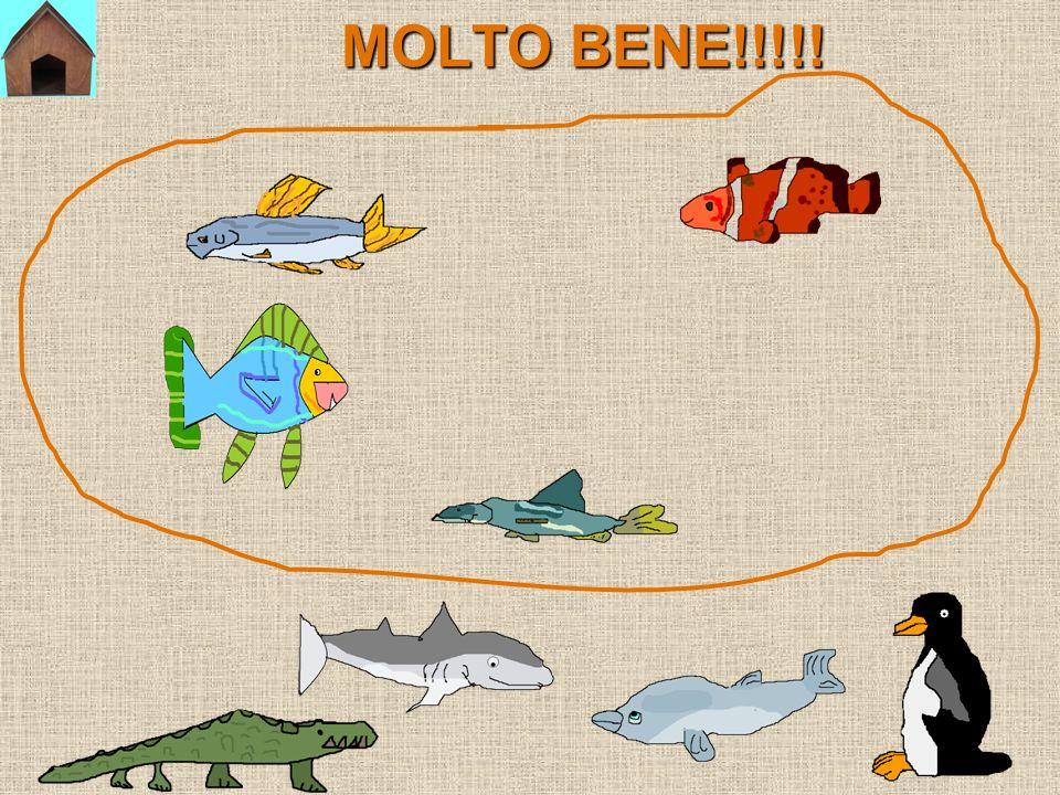MOLTO BENE!!!!!