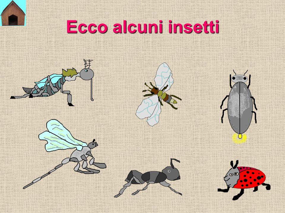 Ecco alcuni insetti