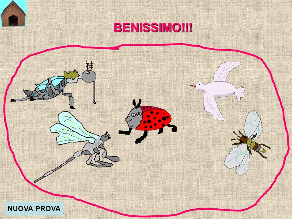 BENISSIMO!!! NUOVA PROVA