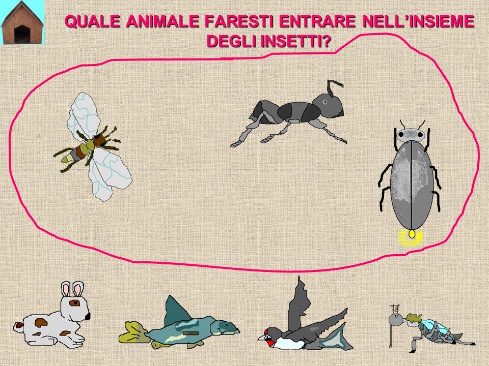 QUALE ANIMALE FARESTI ENTRARE NELL'INSIEME DEGLI INSETTI