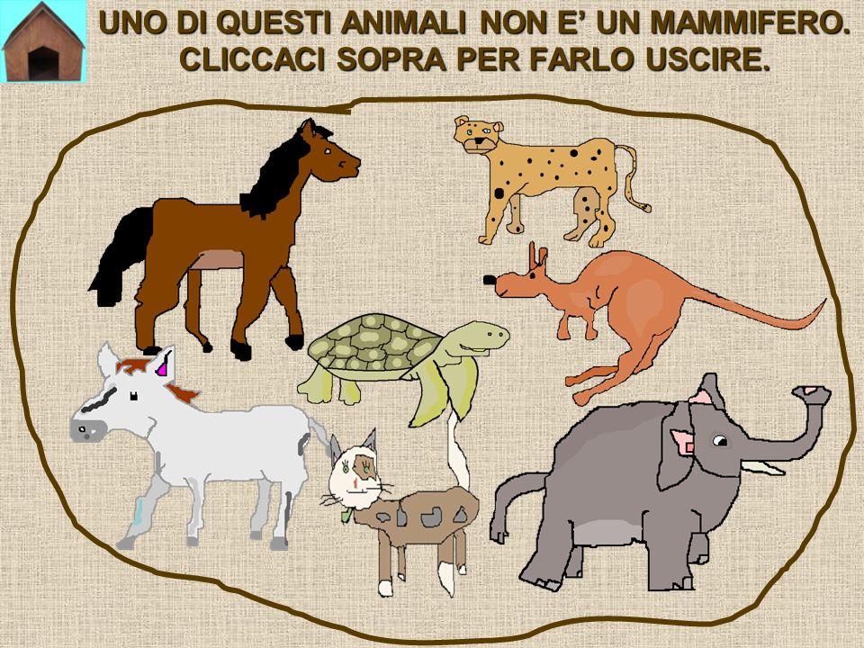 UNO DI QUESTI ANIMALI NON E' UN MAMMIFERO