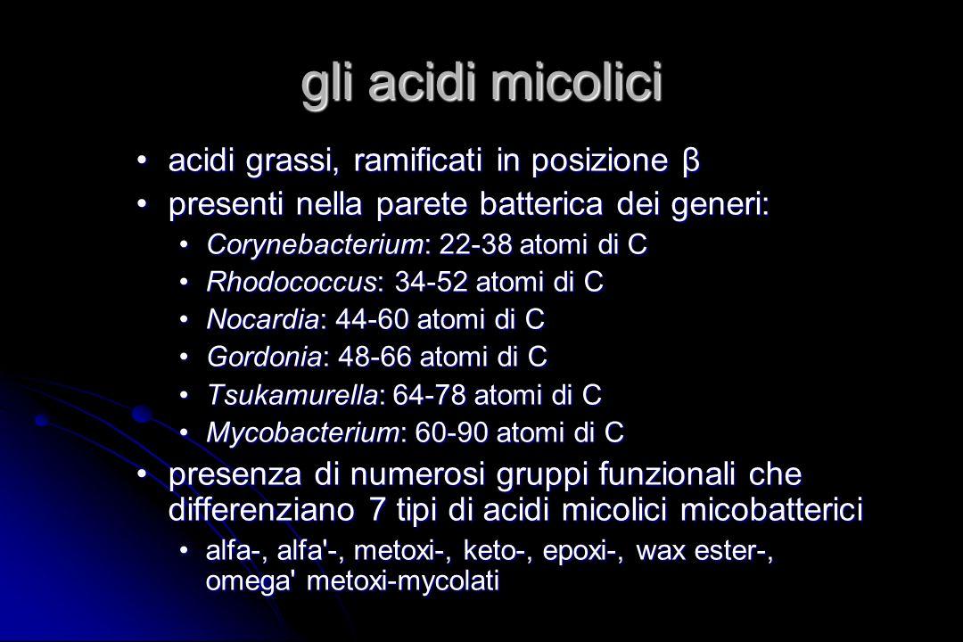 gli acidi micolici acidi grassi, ramificati in posizione β