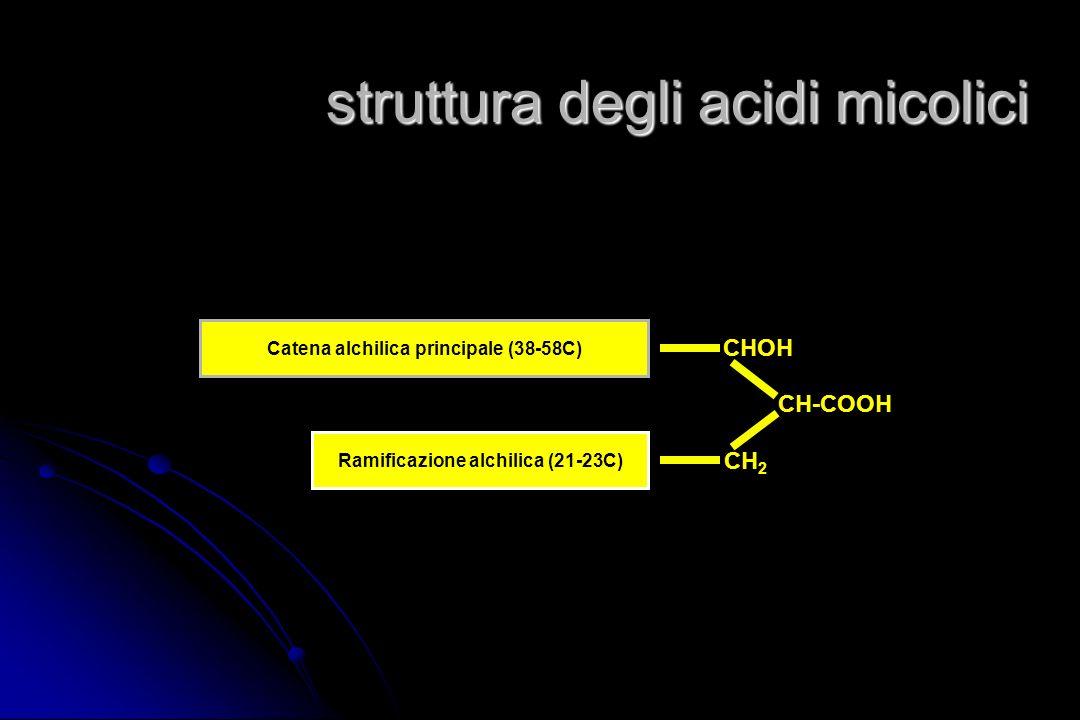 struttura degli acidi micolici