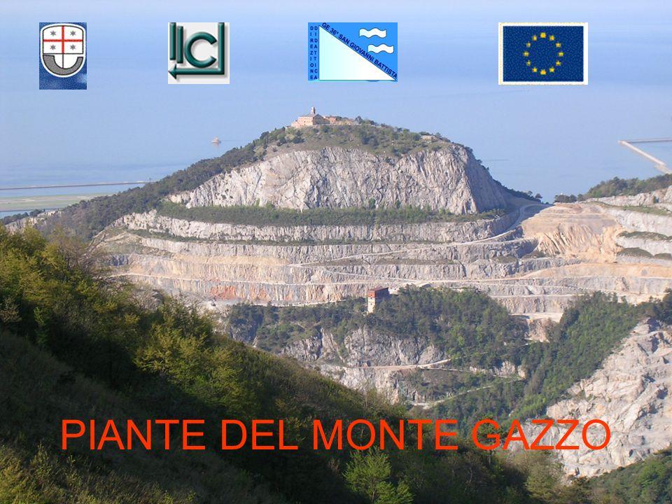 PIANTE DEL MONTE GAZZO