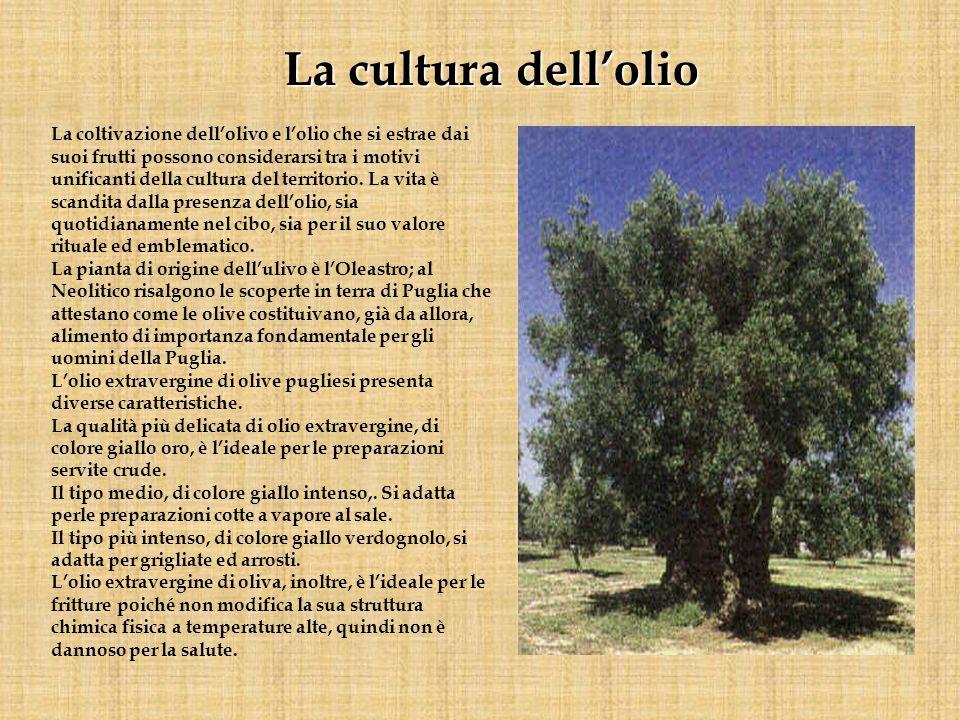 La cultura dell'olio