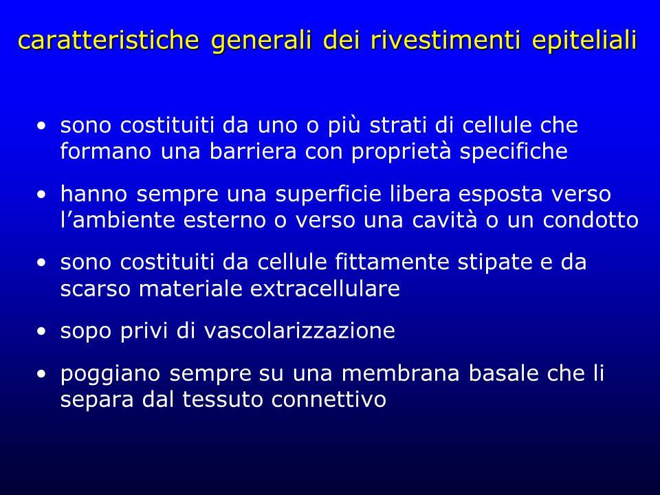 caratteristiche generali dei rivestimenti epiteliali