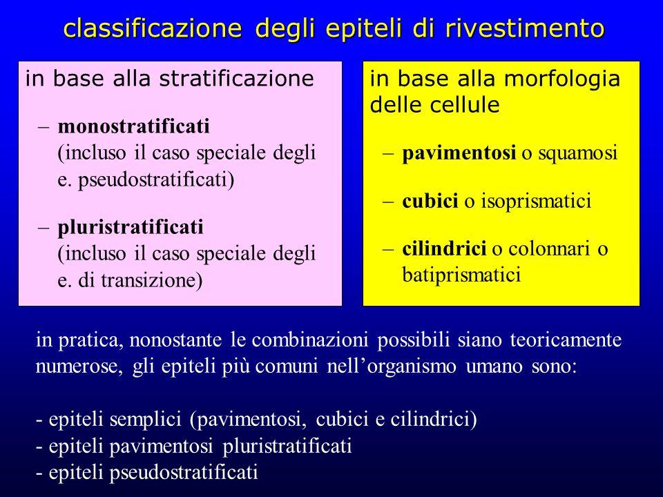 classificazione degli epiteli di rivestimento