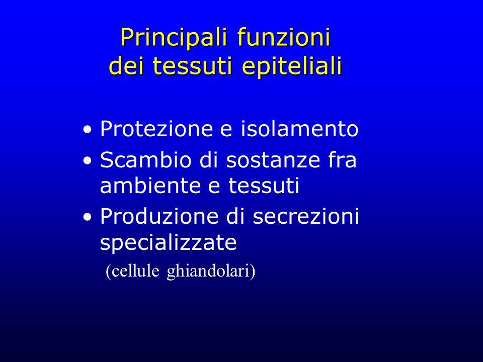 Principali funzioni dei tessuti epiteliali
