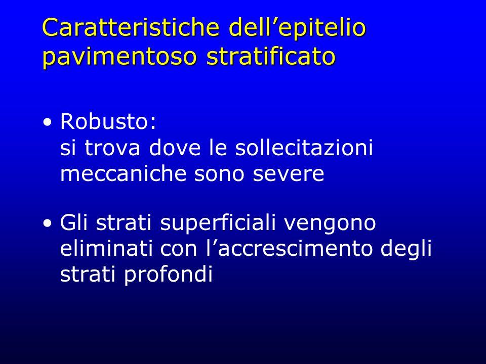 Caratteristiche dell'epitelio pavimentoso stratificato